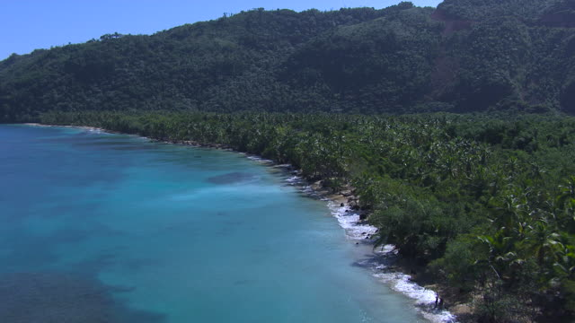 tropical coast and beach, dominican republic - tropical tree stock videos & royalty-free footage