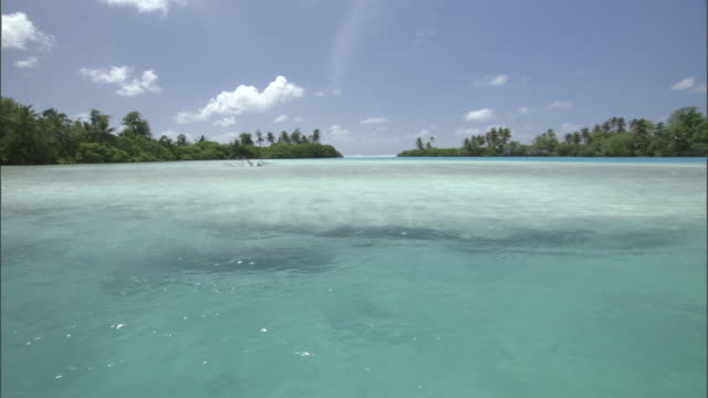 vídeos de stock, filmes e b-roll de tropical coast and coral sea, palmyra atoll, usa - atol