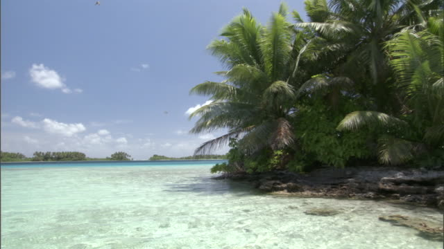 tropical coast and sea, palmyra atoll, usa - shallow stock videos & royalty-free footage