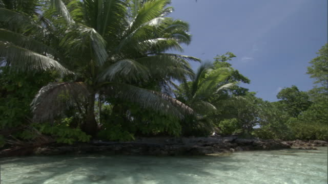 vídeos de stock, filmes e b-roll de tropical coast and sea, palmyra atoll, usa - atol