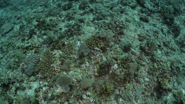 tropical coral colony at deep ocean floor, taiwan - scuba diver point of view stock videos & royalty-free footage