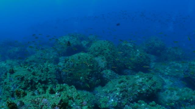 熱帯サンゴ魚深海サンゴ礁でスクーリング - チャールズ・ダーウィン点の映像素材/bロール