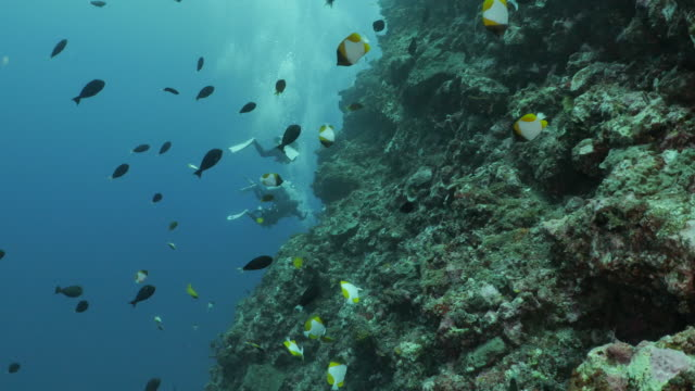 tropical coral fish swimming at undersea reef - philippine sea stock videos & royalty-free footage