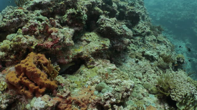 tropical coral fish swimming at undersea reef - scuba diver point of view stock videos & royalty-free footage