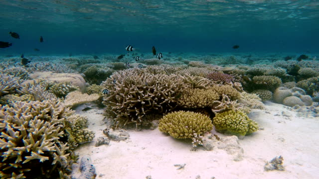 stockvideo's en b-roll-footage met tropical coral garden on maldives - oceaanbodem