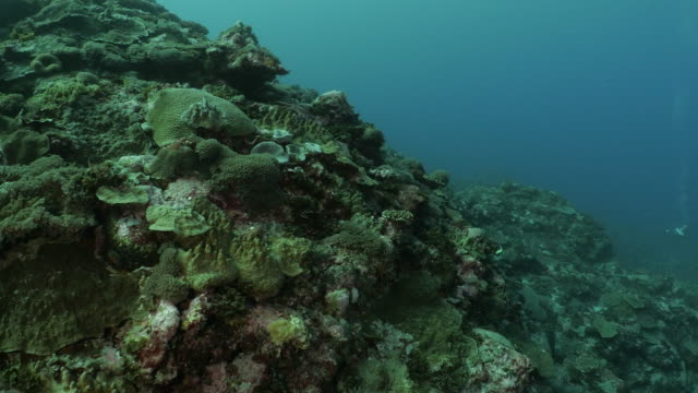 tropical coral reef at deep sea in orchid island, taiwan - scuba diver point of view stock videos & royalty-free footage