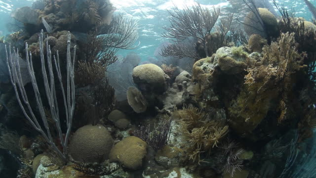 Tropical coral reef in Bermuda, POV