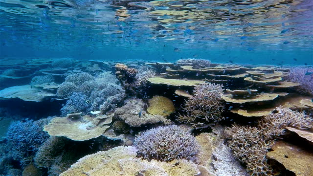 tropical coral reef on maldives in slow motion - ari atoll stock videos & royalty-free footage