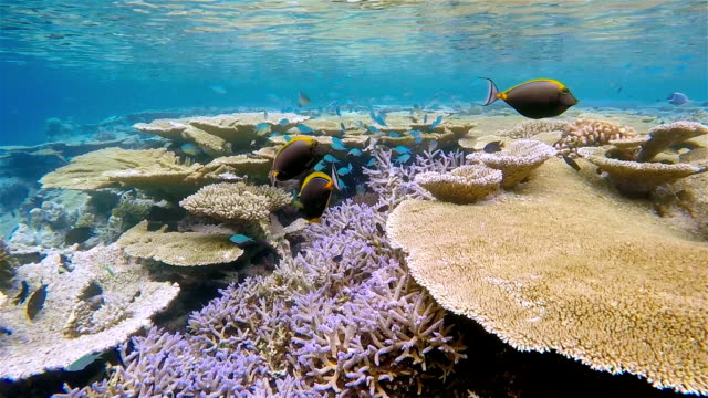 tropical coral reef on maldives - south ari atoll - ari atoll stock videos & royalty-free footage