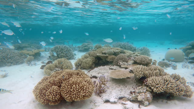 tropical coral reef on maldives - ari atoll stock videos & royalty-free footage