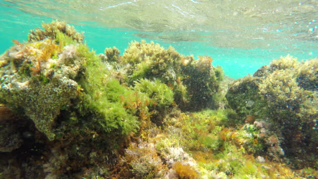 tropical coral reef, underwater shot. beautiful underwater clip. - aquatic organism stock videos & royalty-free footage