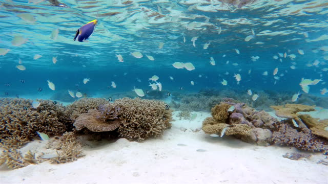 Tropical coral reef with Schools of Fish