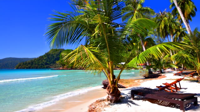tropical family hotel beach with palm tree and outdoor chair - outdoor chair stock videos and b-roll footage
