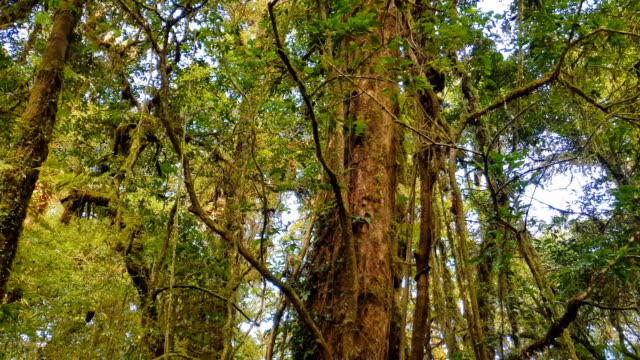 tropical fern and trees in forest - tropical rainforest stock videos & royalty-free footage