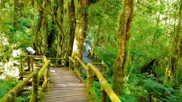 森の中の熱帯シダと樹木 - ボルネオ島点の映像素材/bロール