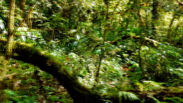 tropical fern and trees in forest - covering stock videos & royalty-free footage