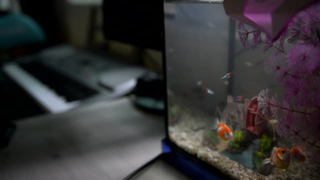 tropical fish and corals in fish tank / south korea - tropischer fisch stock-videos und b-roll-filmmaterial