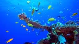 Tropical Fish Corals Marine Reef
