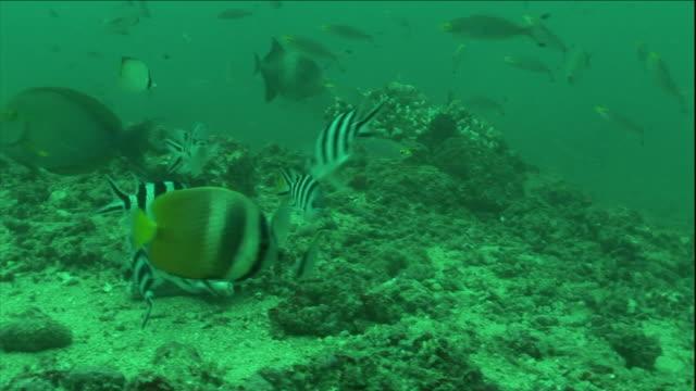 tropical fish dart along the ocean floor. - ocean floor stock videos & royalty-free footage