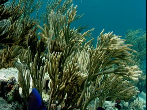 tropical fish feed on undulating corals. - history点の映像素材/bロール