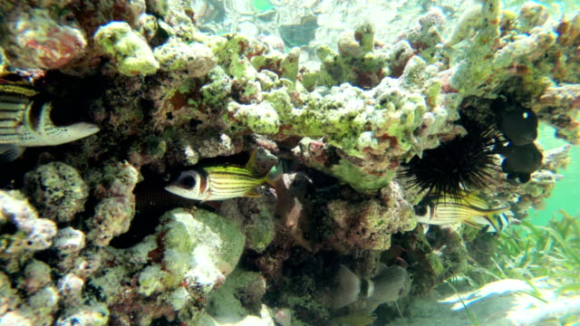 tropical fish hiding near coral - zanzibar archipelago stock videos & royalty-free footage