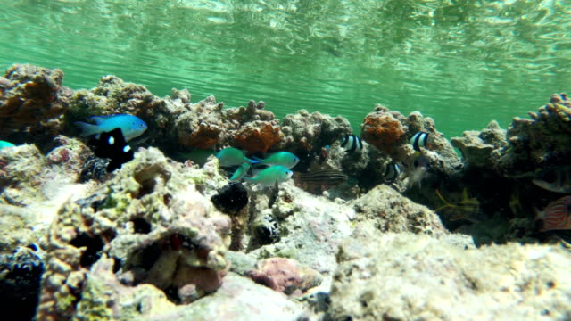 tropical fish hiding near coral - shallow stock videos & royalty-free footage