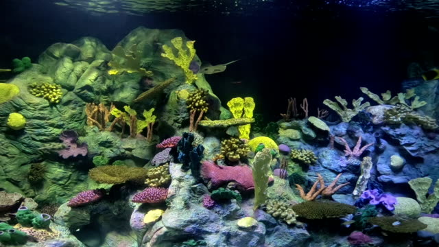 tropische fische im aquarium - meerbarbe stock-videos und b-roll-filmmaterial