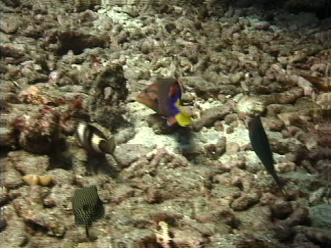 tropical fish moving coral - tierisches exoskelett stock-videos und b-roll-filmmaterial
