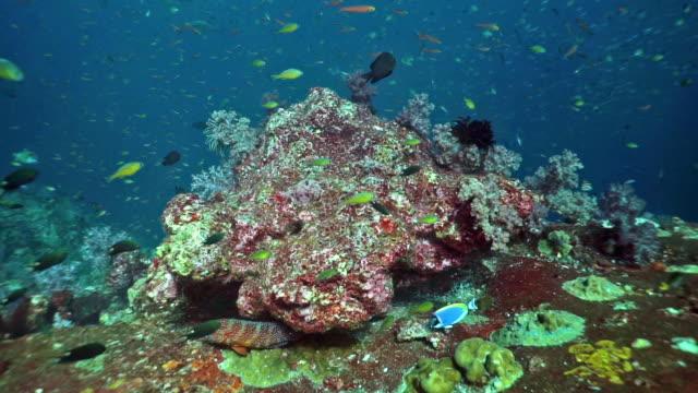 傷んだサンゴ礁の熱帯魚、タイ - 外骨格点の映像素材/bロール