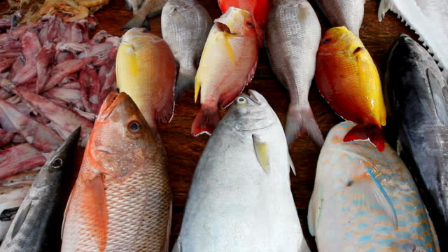 pesci tropicali sulla stall - pesce video stock e b–roll