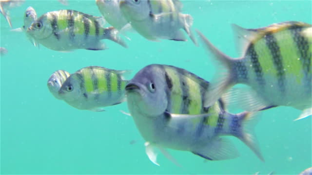 Tropical fish over reef in Thailand