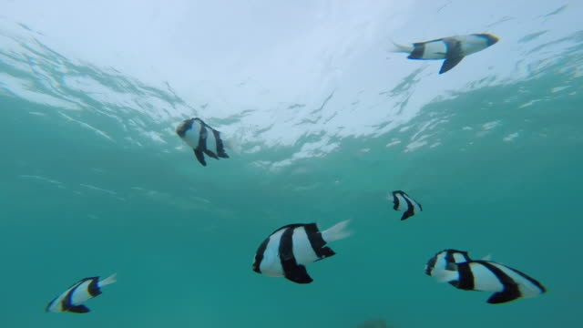 tropical fish, south pacific - south pacific ocean stock videos & royalty-free footage