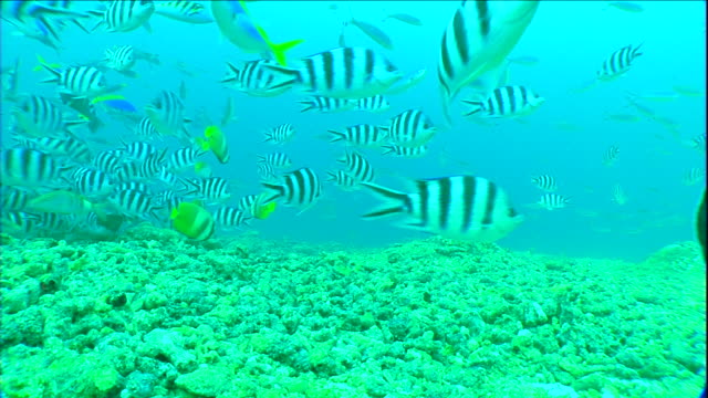 tropical fish swim above corals. - ocean floor stock videos & royalty-free footage