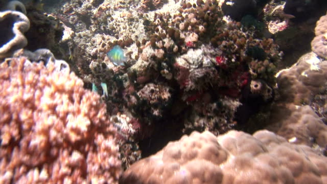 stockvideo's en b-roll-footage met tropical fish swim among corals in jellyfish lake. available in hd. - ongewerveld dier
