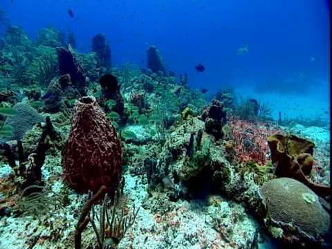 tropical fish swim around a colorful coral reef. - grunt fish stock videos and b-roll footage