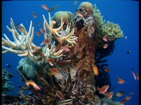 tropical fish swim around coral. - seabed stock videos & royalty-free footage