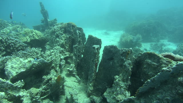 tropical fish swim near a shipwreck covered with coral. available in hd. - shipwreck stock videos and b-roll footage