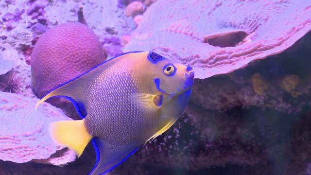 vídeos y material grabado en eventos de stock de ms, ts, tropical fish swimming around coral reef, playa del carmen, quintanaroo, mexico - playa del carmen