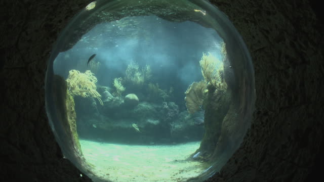 ms, zi, tropical fish swimming in circular aquarium, playa del carmen, quintanaroo, mexico - aquarium stock videos and b-roll footage