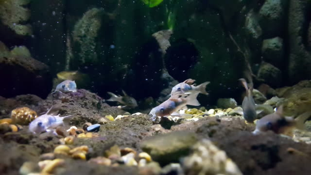 tropical fish - saltwater fish stock videos & royalty-free footage