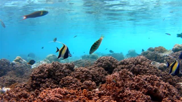 Tropical fishes on coral reef - Maldives