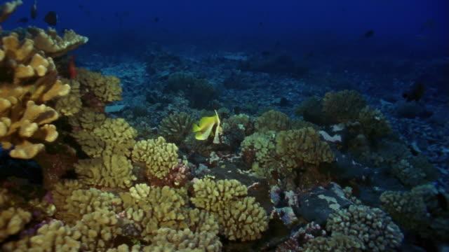 ms, tropical fishes swimming at coral reef - gruppo medio di animali video stock e b–roll