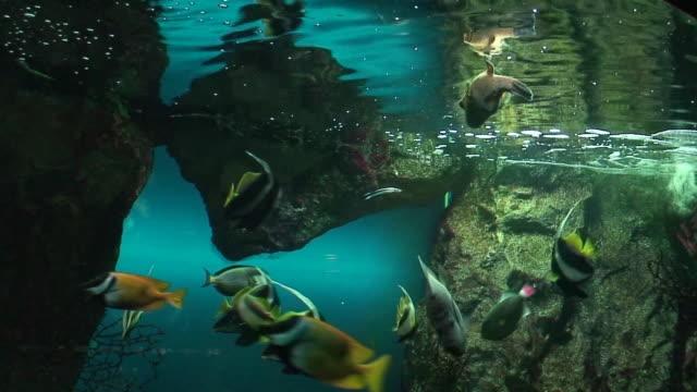 pesci tropicali - gruppo medio di animali video stock e b–roll
