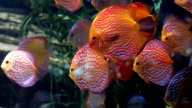 tropical fishes - fish tank stock videos & royalty-free footage