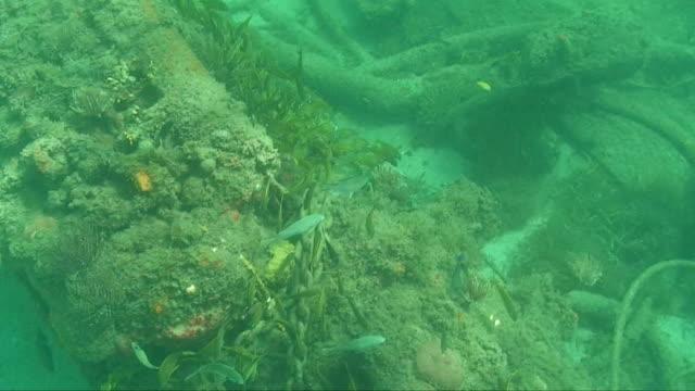 トロピカルな fishses カリブの人工岩礁 hd - フランス海外領点の映像素材/bロール