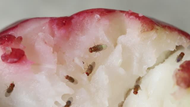 mosche tropicali - marcio video stock e b–roll