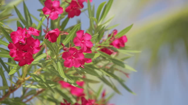 tropical flowers in the yucatan peninsula, mexico - yucatan peninsula stock videos and b-roll footage