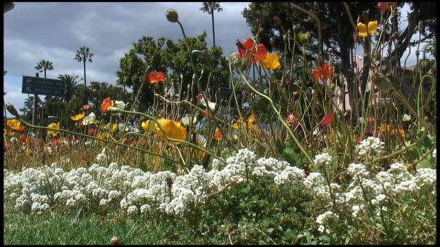 (hd1080i) fiori tropicali assistenza stradale - giardino pubblico giardino video stock e b–roll