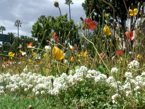 tropical flowers roadside - saturated colour stock videos & royalty-free footage