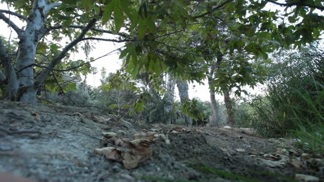 la tropical foliage at south coast botanic garden / palos verdes, california, united states - palos verdes stock videos & royalty-free footage